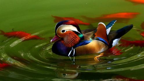 纽约公园里出现一只中国鸟,全城人围观,老外直呼:太漂亮!