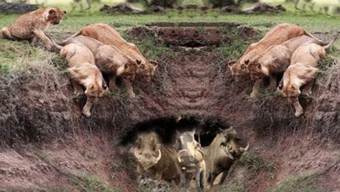 狮子发现洞穴,刚把头探进去瞧瞧,没想到一下子被拉了进去!