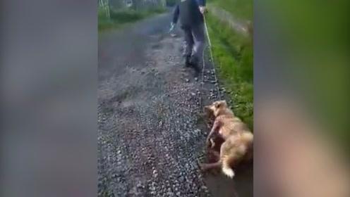 愤怒!狗妈妈诞下6只小狗后 遭猎人枪杀虐待