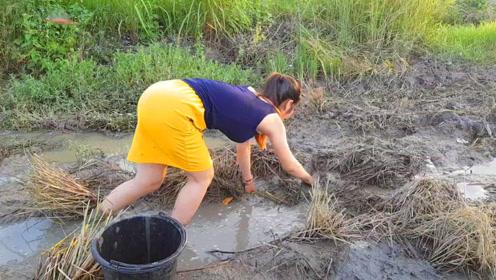 野外田间的水渠,农村女孩把水舀干了抓鱼,看她抓了什么鱼呢