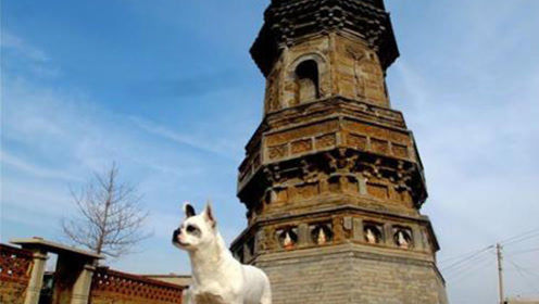 世界第一斜塔就在中国,倾斜度超过比萨斜塔,原因竟是没打地基?