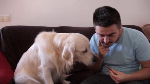 主人训练狗子如何感谢,狗子却只对主人手中的食物感兴趣,好吃嘴