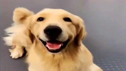 狗狗们的神对话,看它们说了什么把铲屎官吓坏了,都忍住别笑!