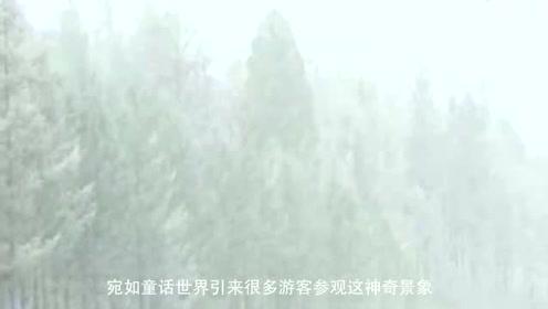 漠河下雪了树枝挂满冰霜宛如童话世界,南方人扎心吗