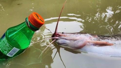 小伙用塑料瓶自制捕鱼神器 ,丢进河里,鲶鱼拽着瓶子一顿乱跑!