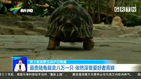 男子朋友圈卖龟大赚1000万,最贵一只8万元,还没来得及开心就被抓