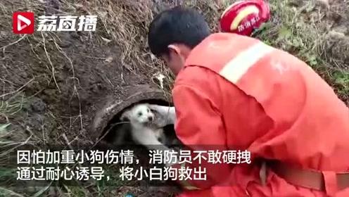暖哭了!小狗被救后拖着瘸腿追消防车