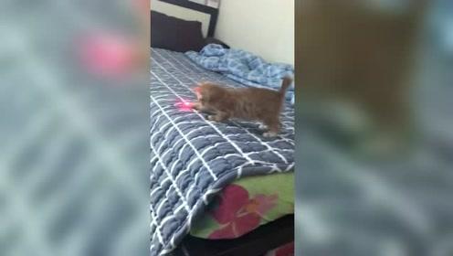 逗猫神器啊!