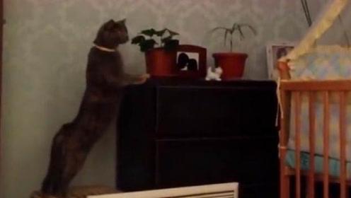 自从家里有了宝宝,猫咪画风被迫突变,镜头记录爆笑时刻