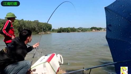 河边男子看着钓竿浮漂被拉动立刻拉钓,钓获这条大鲤鱼真不容易
