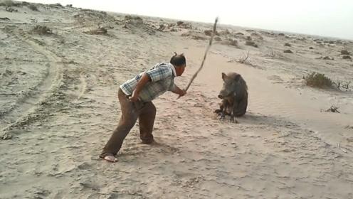 男子挑衅受伤野猪,不断用棍子去戳,下一秒野猪发了狂!