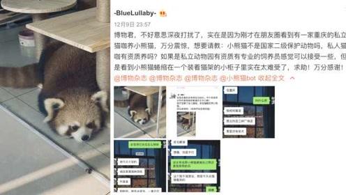 重庆一咖啡厅养小熊猫当店宠招揽客人,网友发文质疑