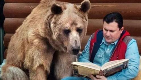世界上最励志的熊,不仅自力更生近20年,甚至还为主人赚钱养家!