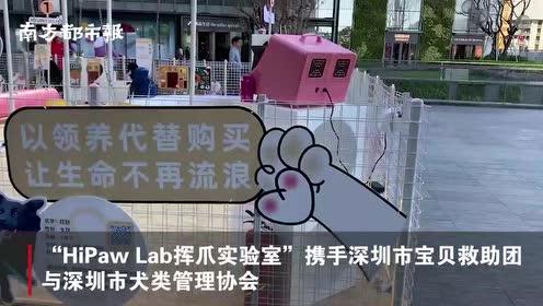 深圳这个宠物活动来袭,搭建流浪犬领养平台,设有滑梯猫屋跷跷板