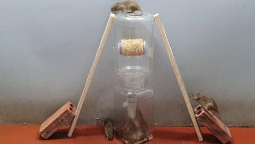 捕鼠器制作,你学会了吗?