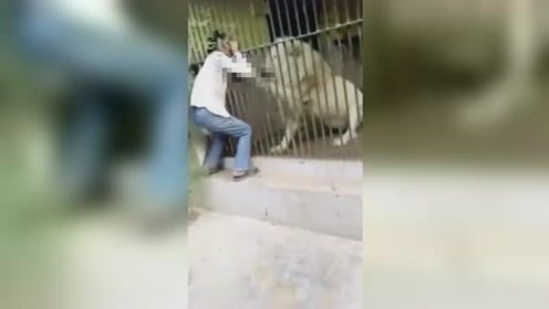饲养员喂狮子时发生意外 狮子突然跳起咬住其手臂40秒