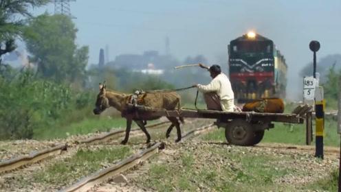 印度最淡定大爷,火车到跟前都不慌,却把毛驴吓坏了!