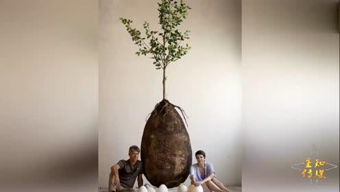 """考古学家在树下面挖出一颗巨蛋敲开一看里面""""藏""""着一个人"""