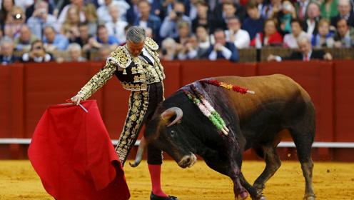 逃脱的牛横冲直撞难抓,最后请来斗牛士一招智取