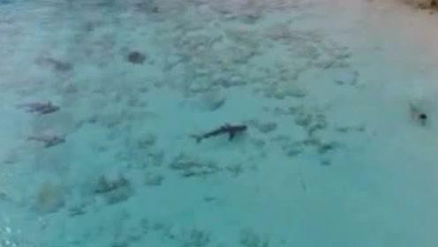 男孩不知危险一猛子扎进海里 4只鲨鱼立马围了上来