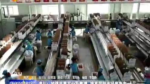 洛川县:加强苹果后整理  提高国际市场竞争力