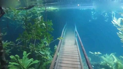 国外一个公园被暴雨淹没,水下拍下的这一幕犹如人间仙境