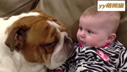 斗牛犬调戏萌宝宝 ,从耳朵舔到脸颊,小宝宝痒的都要招架不住了
