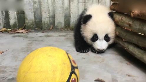 玩具小球漏气,熊猫宝宝心疼不得了,这委屈表情像不像小时候的你