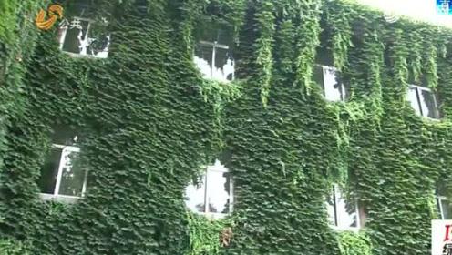 """绿植包裹建筑 教学楼长出""""天然空调"""""""