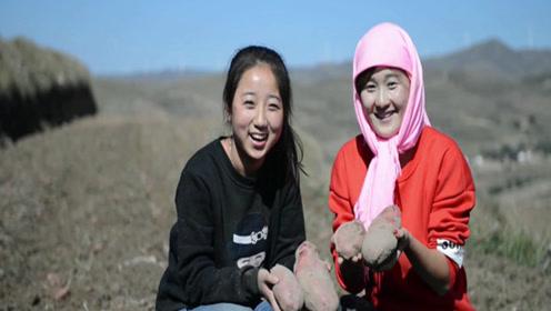 一个曾经的救命蛋,毫不起眼,却养活了大半个中国的人