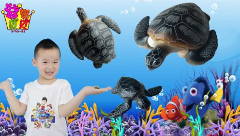 跟宝宝一起认识海洋动物乌龟 益智贝贝亲子早教
