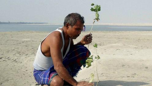 印度男子39年如一日潜心种树 将荒漠变成森林
