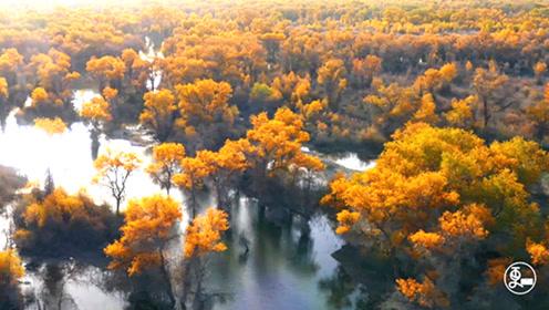 新疆这片金色树林,美了10000年!