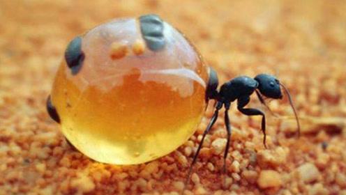 """地球上五种最神奇的""""蚂蚁"""",这样的进化,人类都羡慕了"""