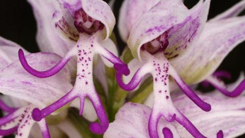十种看起来像疯狂生物的花