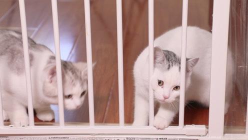 家里进了新猫之后,该如何介绍给原住民