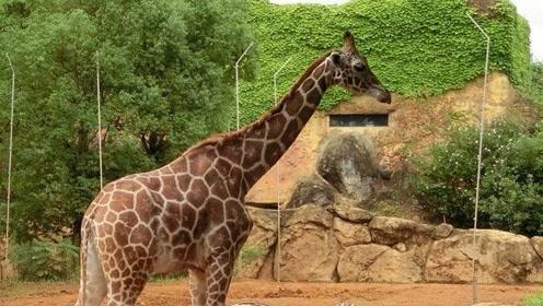 """这个""""欧洲最佳动物园"""",竟然光明正大杀死他们的动物!"""