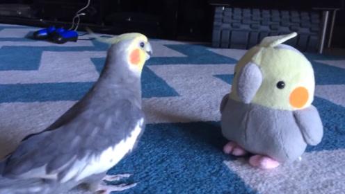 """这只玄凤鹦鹉,一看到""""发福版""""的自己,赶紧上前唠嗑"""