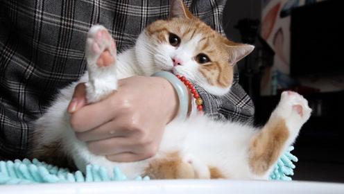 给四只猫洗爪子,比洗澡累十倍,猫先是委屈挣扎最后直接骂出来!