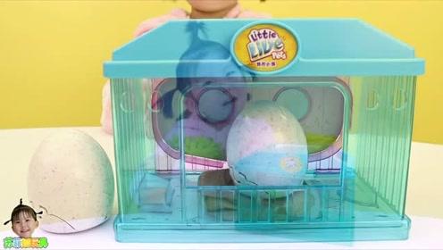 《苏菲娅玩具》惊喜蛋孵出了什么颜色的小鸡呢?