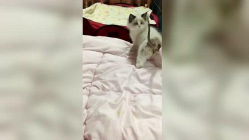 小猫咪内心是奔溃的:长了个老鼠尾巴,难道老鼠吃多了?