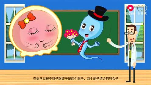 小蝌蚪离开男性身体,在女性体内还能活多久?