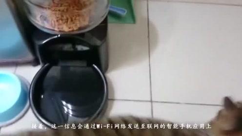 """肥猫的救星!我国研发""""智能喂食器"""",避免猫吃撑"""