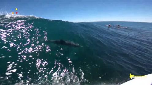 男子海上玩冲浪,突然水里出现了一条大鱼,网友 ,该不会是鲨鱼吧