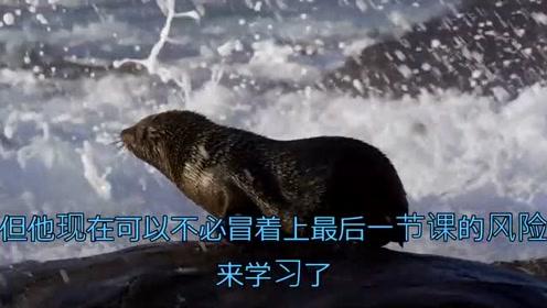 这些海豹到危险的水域探索学习,为自己抓住食物提供了更好的锻炼
