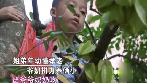 小男孩爬上五米高树给爷奶摘杨桃,姐弟上山给爷奶送饭.