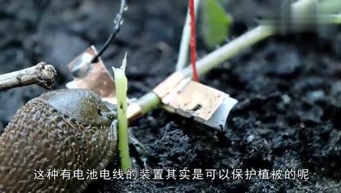 为什么会在植物的旁边放块电池?接通电源后,不得不佩服小哥脑洞