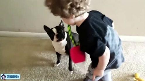 小孩与狗狗玩耍,狗狗们的举动太暖心了!