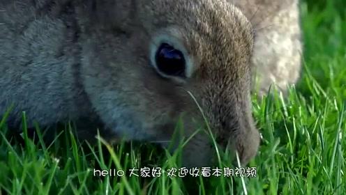 男子野外散步发现一块草坪会动,轻轻打开后,太可爱了