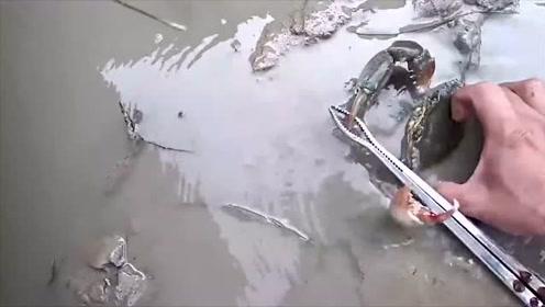 赶海小哥拿开烂泥里的破塑料管,意外发现躲在底下的大家伙
